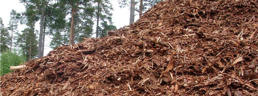Biomasa, potencia energética en España